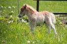 Mini Ponyfohlen (21.5.2017)