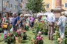 Rosen in der Oberen Altstadt Lienz (23.6.2018)