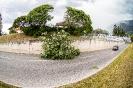 Baum auf strasse Grafenbachstrasse (22,8,2020)